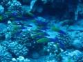 Isla de pascua buceo 12