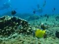 Isla de pascua buceo 4